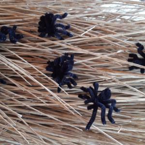 Lekker eng deze spinnen. Ideaal om mensen mee aan het schrikken te maken.